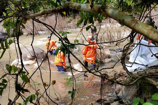 ゾウ11頭が滝で転落死、再発防止の対策強化 タイ国立公園
