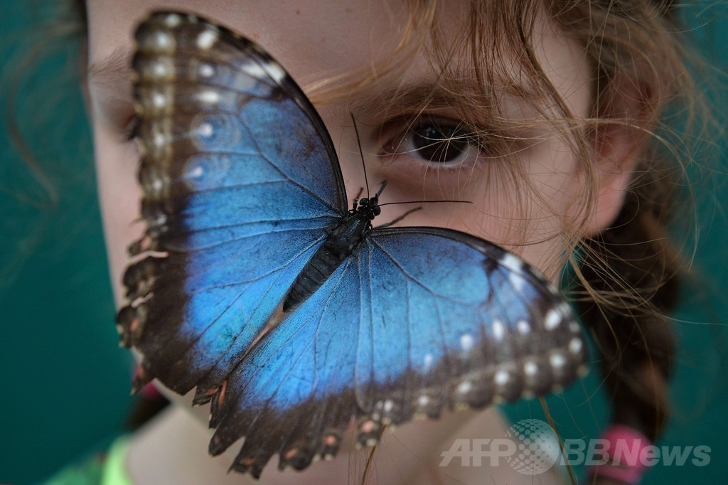ロンドンに世界の蝶が集結