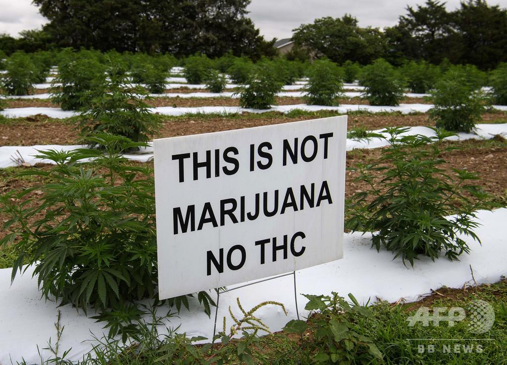 「大麻とは違う」ヘンプの栽培農家、飽和市場や泥棒に苦戦 米国