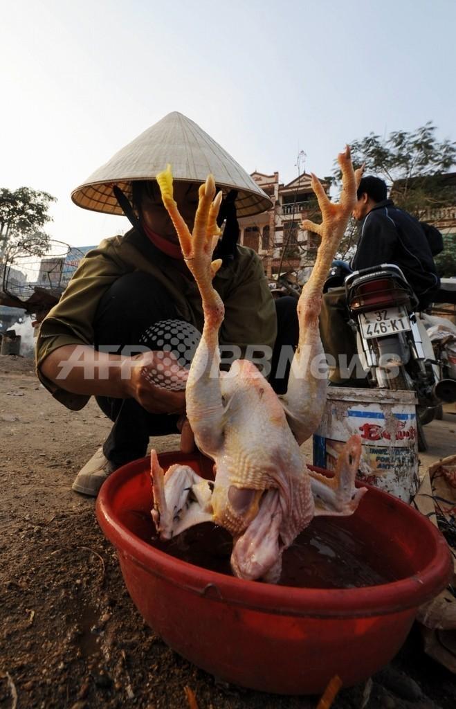 女性が鳥インフルエンザで死亡、2003年末から53人目 ベトナム