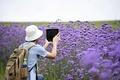 観光客の心奪う一面の紫、貴州