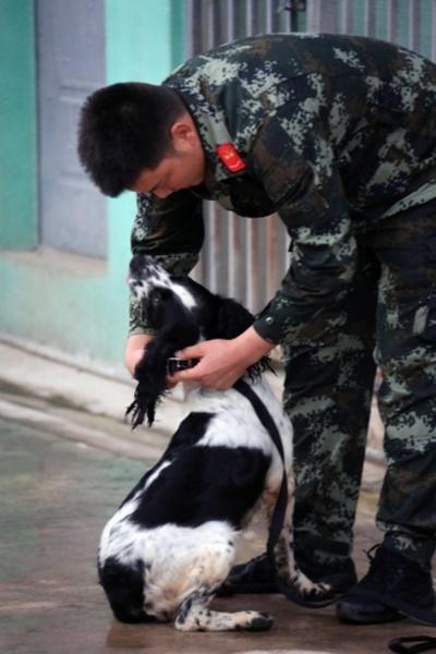 物静かだけど鼻は確か、雲南の国境守る麻薬取締犬