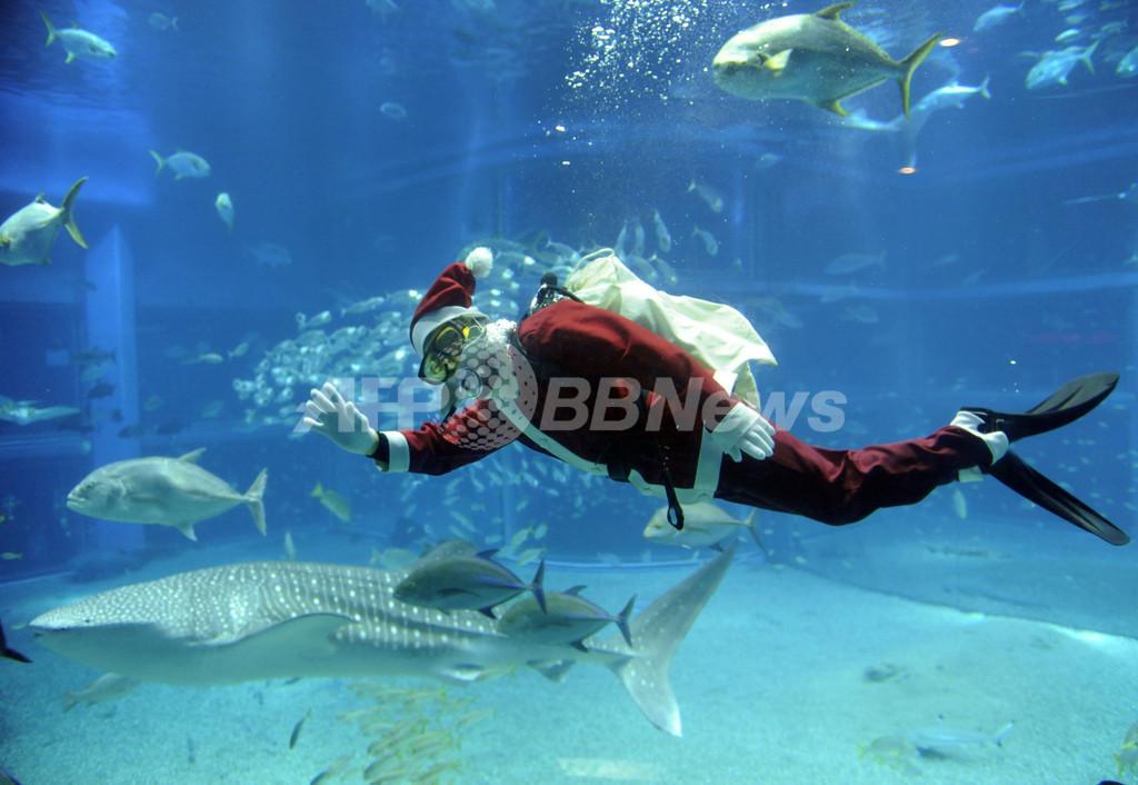 水族館もクリスマス、「サンタダイバー」登場 大阪・海遊館