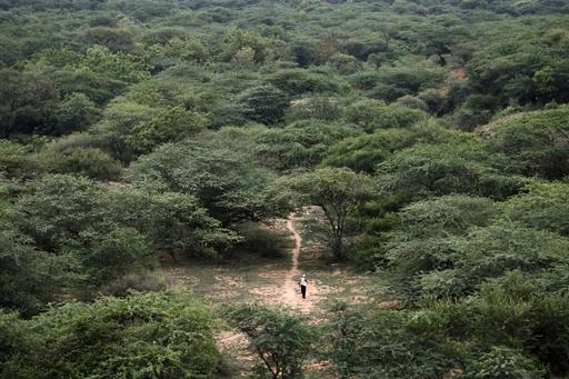 気候における森林の役割、考えられていたより大きかった 研究成果