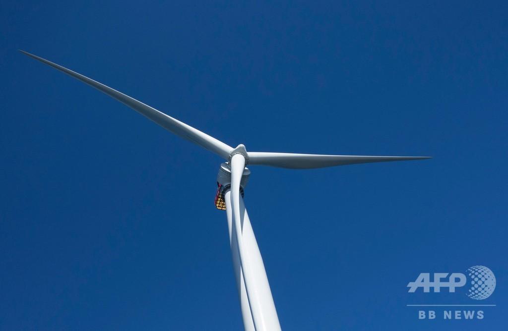 風力発電でがんになる? トランプ大統領のとんでも発言に身内も当惑