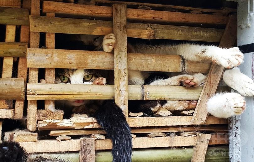数千匹の生きた猫を押収、「消費するため」密輸 ベトナム
