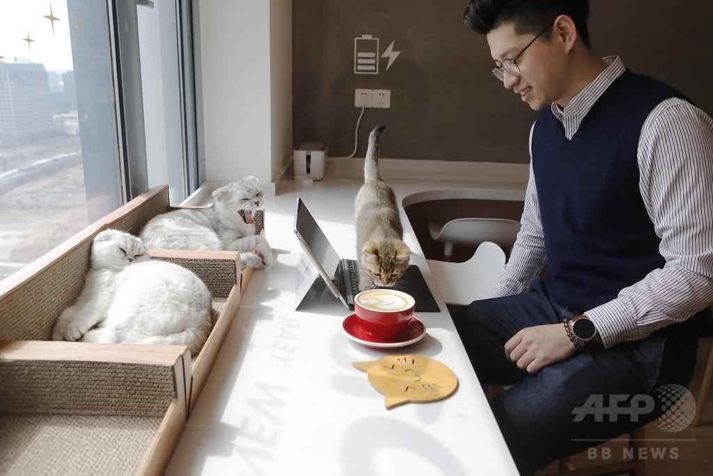 高層階の猫カフェで日向ぼっこ 上海