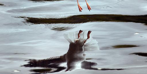 【今日の1枚】水面にふわり
