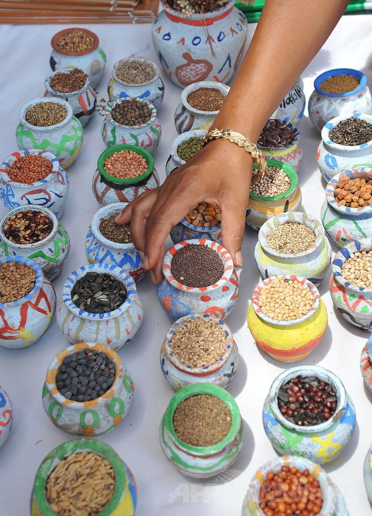 カレー香辛料で血圧降下、ラット実験で確認 インド研究