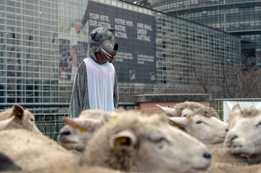 欧州議会前にヒツジの群れ出現、その訳は…