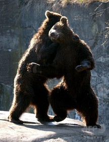動物園飼育員、クマに襲われ死亡 スウェーデン