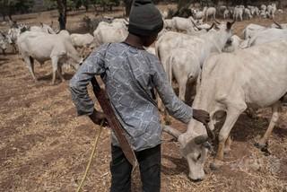 農民が牧畜民の集落を襲撃、少なくとも30人死亡 ナイジェリア