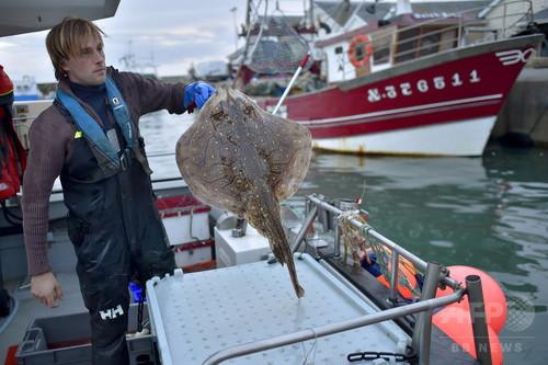 フランス人シェフらが熱視線、日本の伝統技術「魚の生け締め」