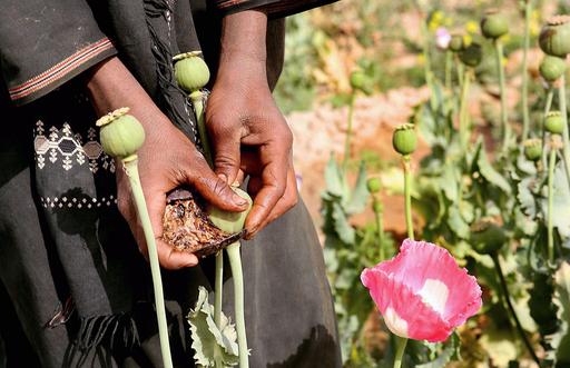 アフガニスタンのヘロイン生産量、過去最高に