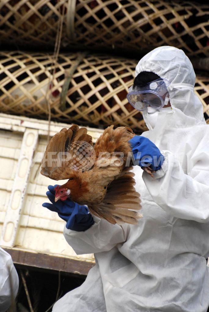 インド北東部で鳥インフル拡大、人への感染懸念高まる