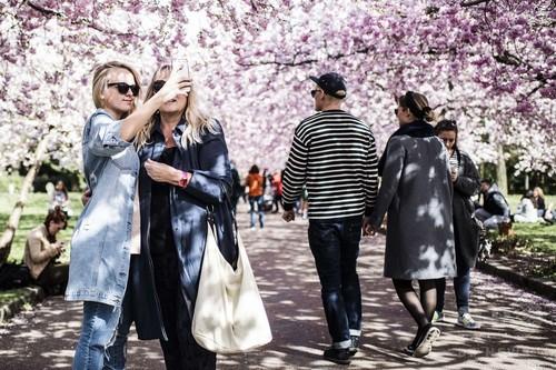 【デンマーク】北欧にも春、デンマークで桜が満開