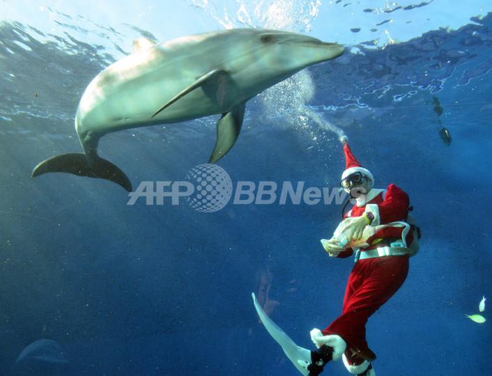 水族館に早くもクリスマス到来、横浜・八景島シーパラダイス