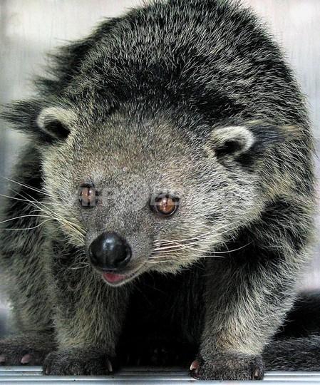 世界の生物の10%が絶滅の危機、オーストラリアの個体数調査
