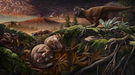 哺乳類の鋭い聴覚担う「耳小骨」、進化の時期裏付ける化石を発見