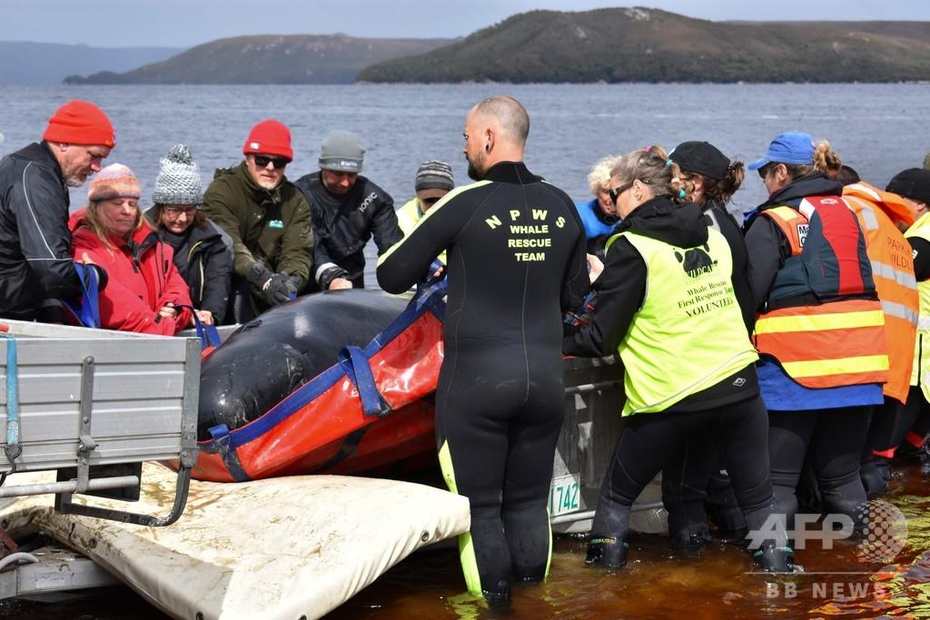 豪に打ち上げられた大量のクジラ、やむなく安楽死処分も