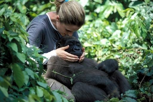 サイバー密輸が脅かすカメルーンの霊長類