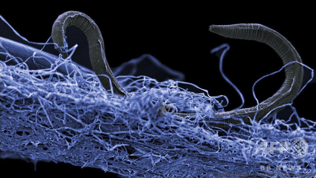 地下深部に広大な「生命体の森」 国際研究で発見