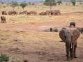 世界の自然保護区、約3割に「強い人的圧力」 研究