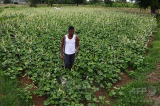 農薬中毒で農民20人死亡、負傷者も多数 インド