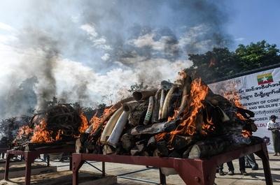密猟品を公開焼却処分、1.5億円相当 ミャンマー