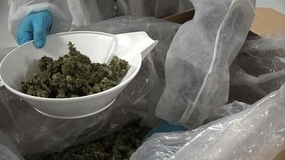 動画:カナダ大麻解禁まで数日、使用できる場所に制限あり?