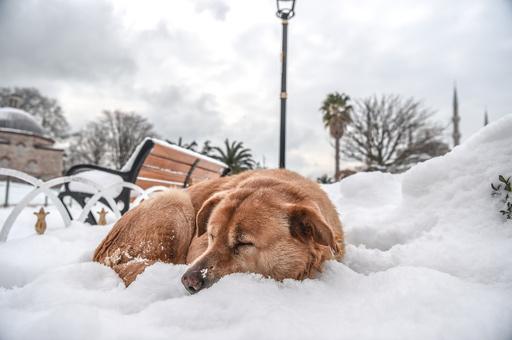 【特集】寒そうなのになぜかほっこり…雪がある景色