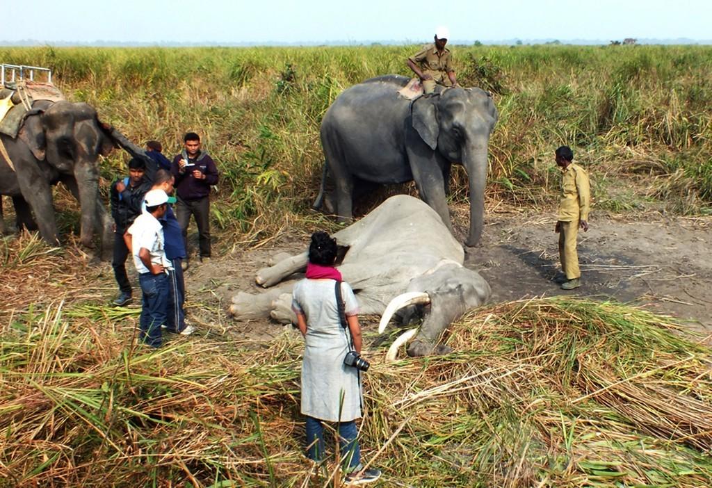 73歳ゾウの死に仲間も涙、インド国立公園