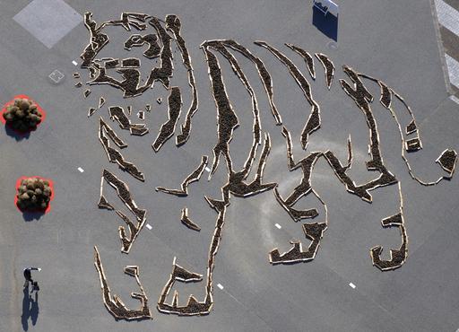 ひたち海浜公園に巨大な虎の地上絵、茨城