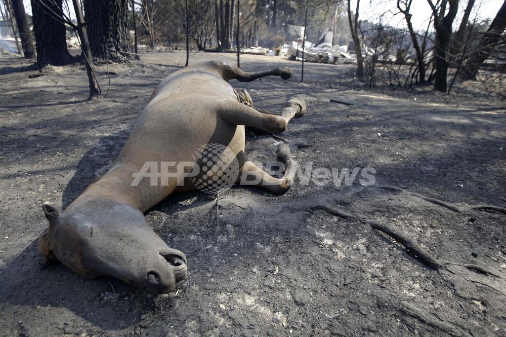 忘れられた犠牲者・動物たち、オーストラリア山火事 写真6枚
