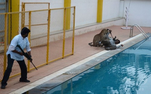 ヒョウが学校に侵入で捕獲劇、インド・バンガロール