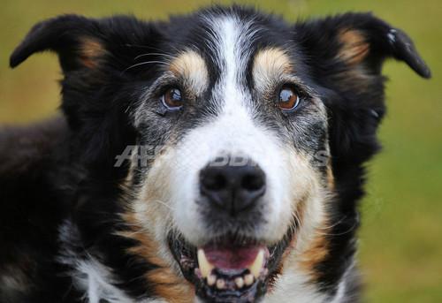 最高齢の犬は25歳、ドイツに健在か