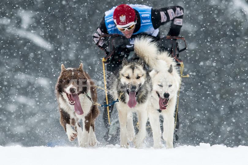 雪の中を疾走!犬ぞり欧州選手権 ドイツ