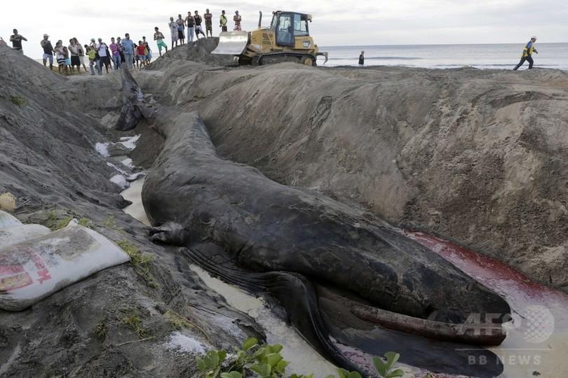 砂浜に巨大クジラ、救出の努力実らず ニカラグア