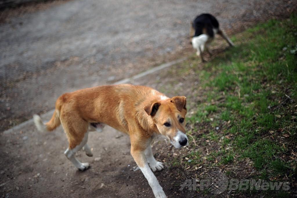中国当局、野良犬100匹生き埋めに?
