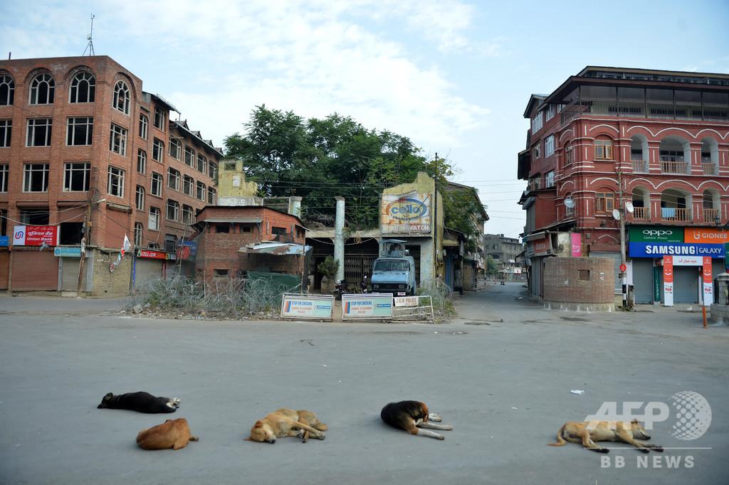生後3時間の新生児、病院で犬の群れに襲われ死亡 インド