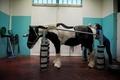 【AFP記者コラム】美しく唯一無二、パリ郊外にある馬専用施設