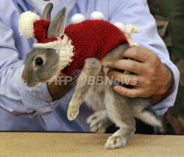 究極の癒し系?ウサギのファッションショー