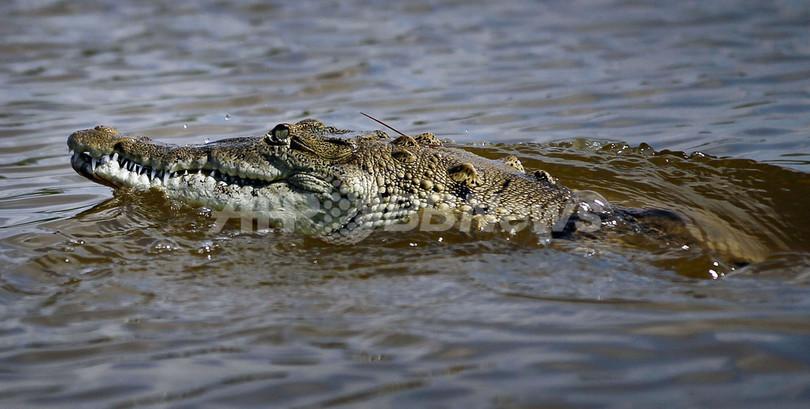 川で用を足したらワニが尻をがぶり、マレーシア