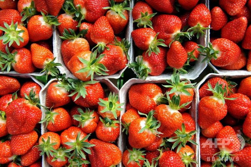 イチゴに縫い針混入事件、容疑者は農園の元管理人 豪警察