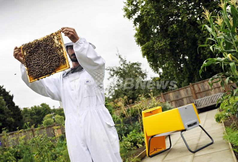 自宅の庭で手軽に養蜂を、新型巣箱「ビーハウス」英国で発売