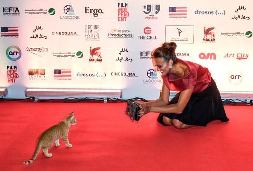 レッドカーペットに珍客? エジプト映画祭