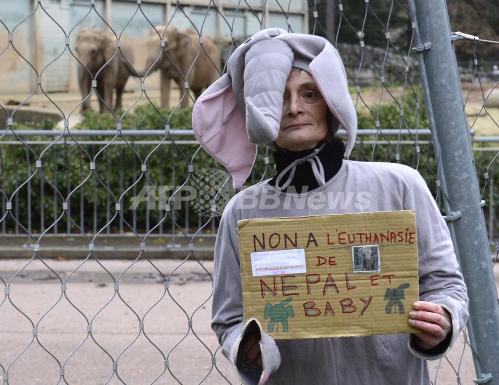 助命運動でゾウ2頭の安楽死中止、フランス