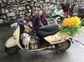 販売禁止のうわさも「犬肉祭」今年も開催 中国