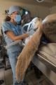 乳頭腫のウミガメ増加、対応に追われる米フロリダの「カメ病院」