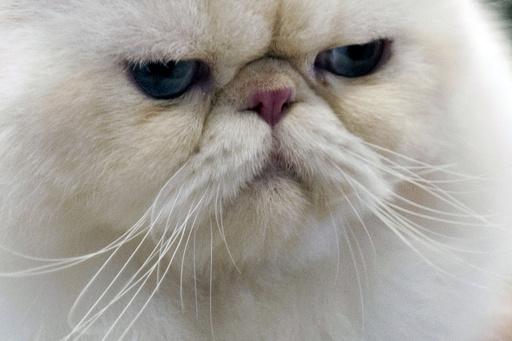 怒ったネコ、飼い主一家を「身柄拘束」 米オレゴン